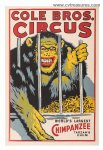 Cole Brothers Vintage Circus Poster World's Largest Chimpanzee