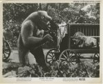 MIGHTY JOE YOUNG Original Vintage photo still Lion